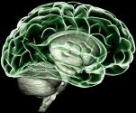 immagine rappresentativa della notizia Uso cronico di marijuana, con la risonanza visibili anomalie cerebrali