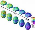 immagine rappresentativa della notizia La maturazione del cervello adolescente